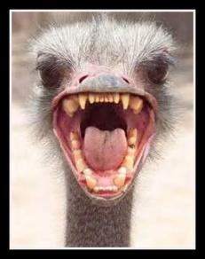Mad Ostrich