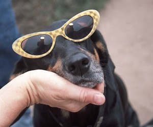 sleepy dog glasses