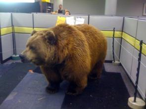 office-prank-bear