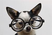 critical-thinking-dog