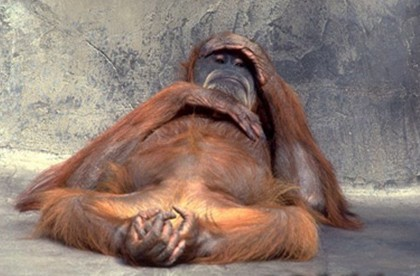 Hungover-Monkey